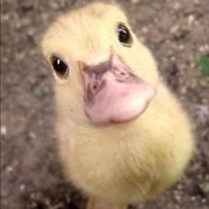 CHICK 🐣 NOW THIS IS A CUTE CHICK 🐥 💯‼️😂